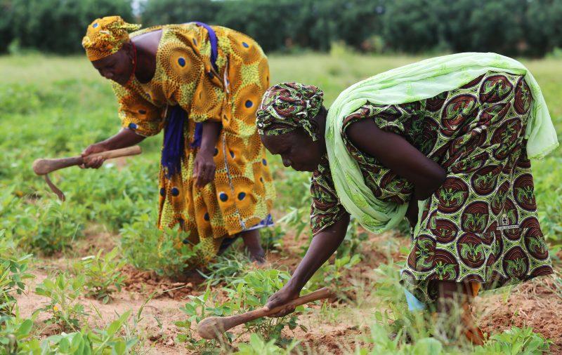 Fighting Malnutrition From The Vegetable Garden - Action Against Hunger