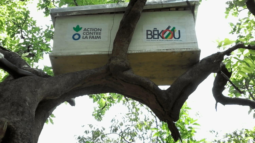 Beekeepers sustainable future - Action Against Hunger